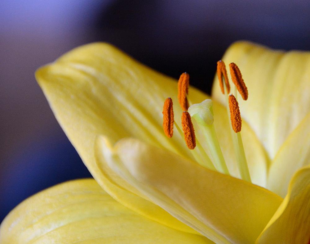 Photo in Macro #flowers #nature #floral #macro