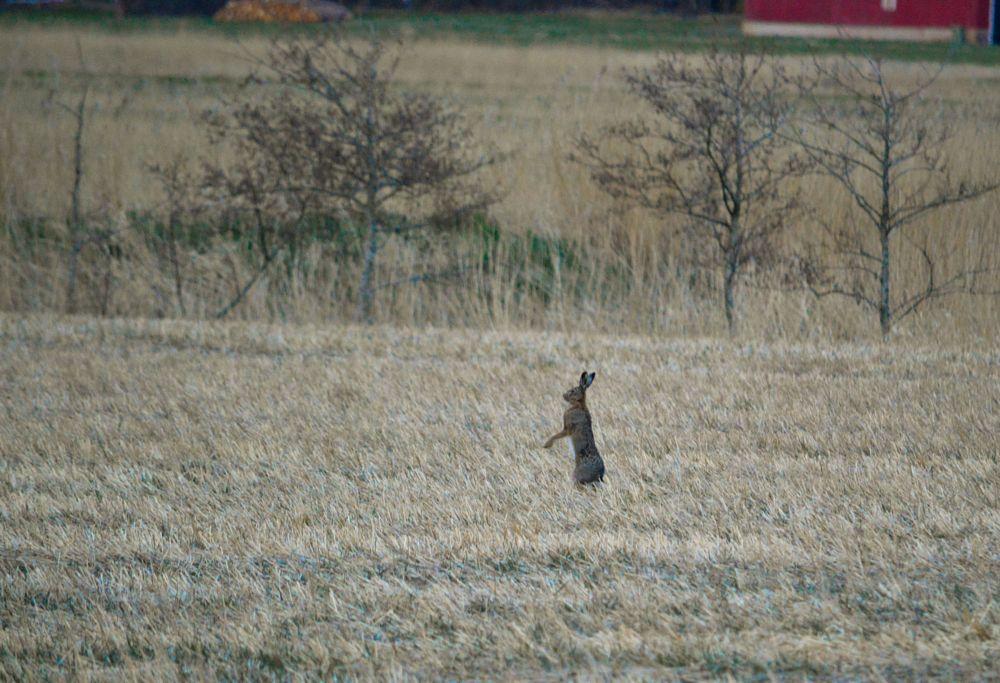 Photo in Nature #hare #mammal #nature #landscape
