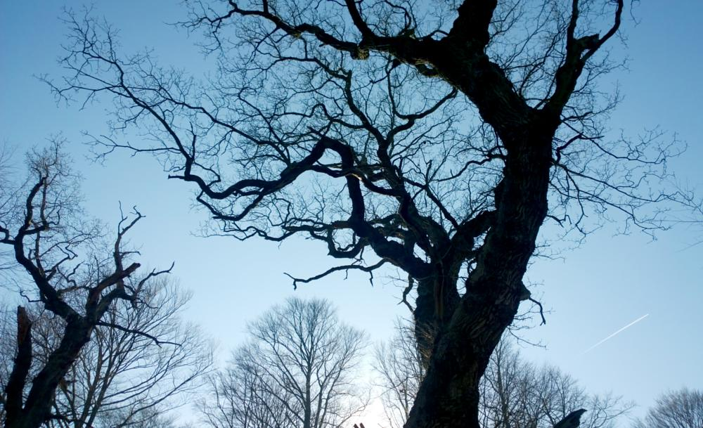 Photo in Nature #winter #trees #sky