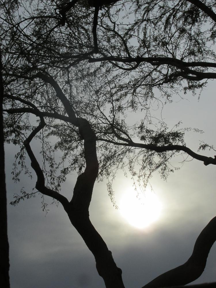 Photo in Nature #tree #nature #clouds #sun