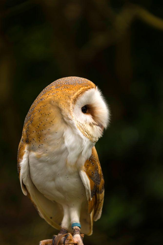 Photo in Random #lunch #barn owl #beauty