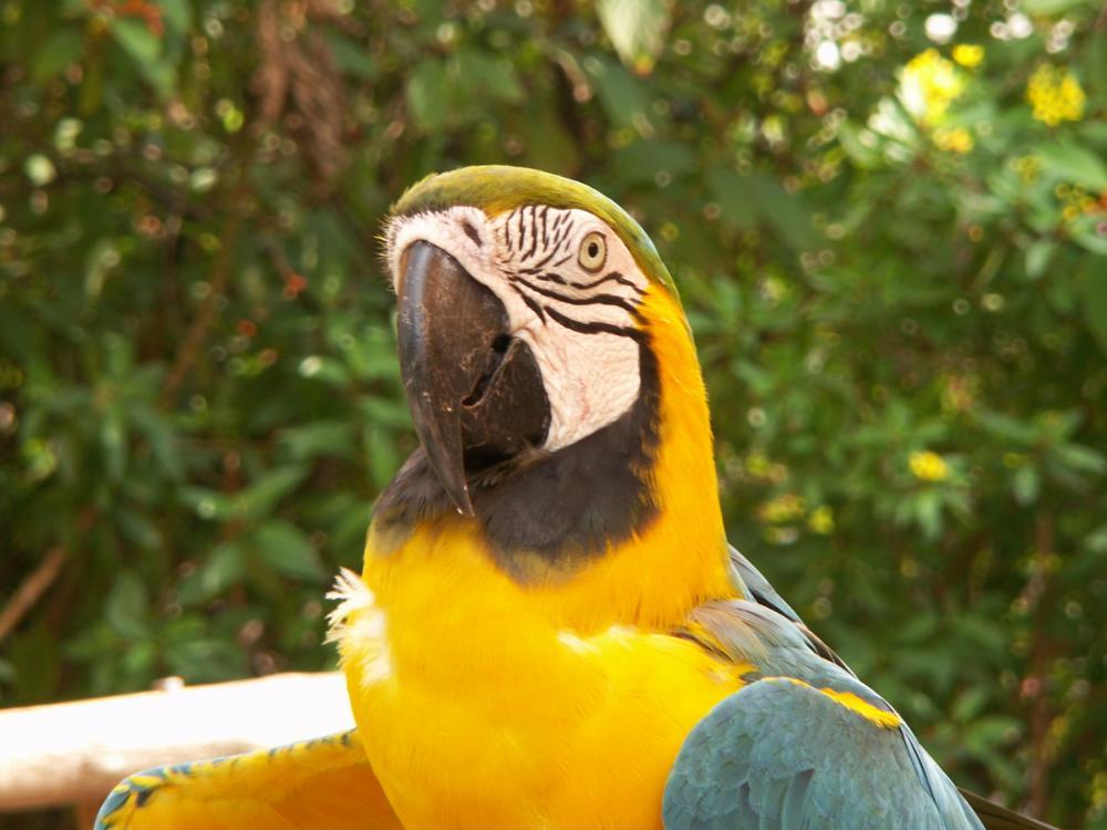 Photo in Animal #bird #parrot #fowl