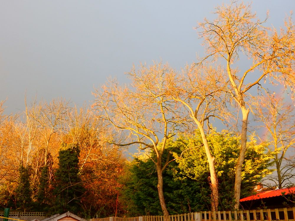 Photo in Random #linton #cambs #cambridgeshire #trees #england