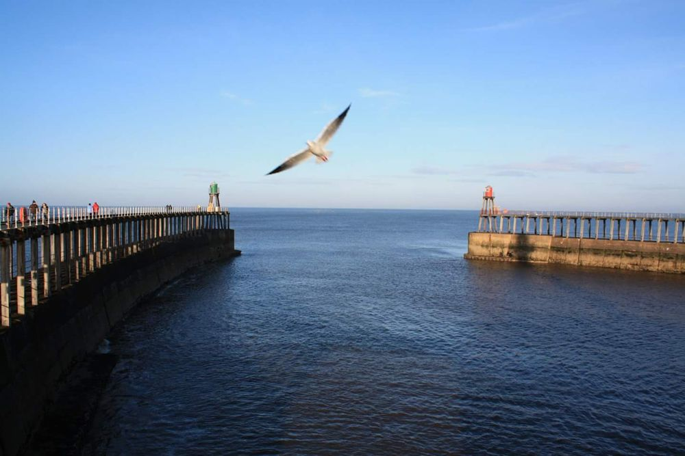 Photo in Sea and Sand #whitby #seaside #pier #beach #northyorkshie #birds #sea #harbour