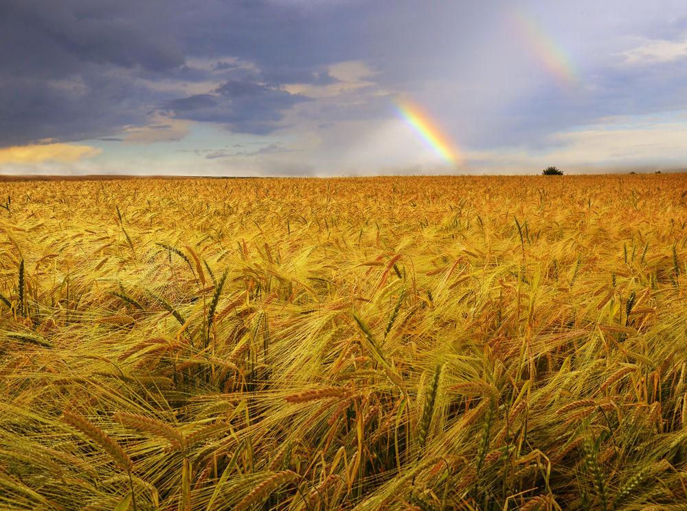 Photo in Landscape #field #rainbow