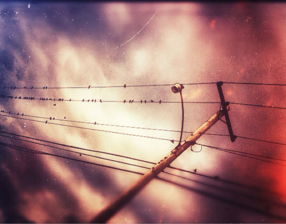 Photo in Random #bird on a wire #birds #telephone #dragunfly #youpic #photography #photo #pic