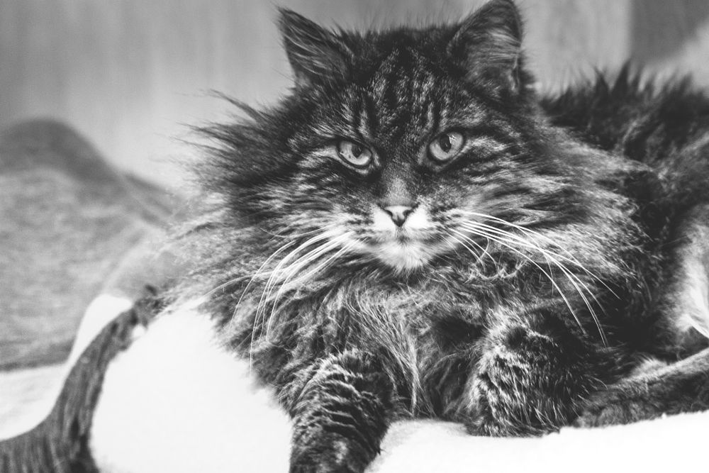 Photo in Black and White #cat #pet #friend