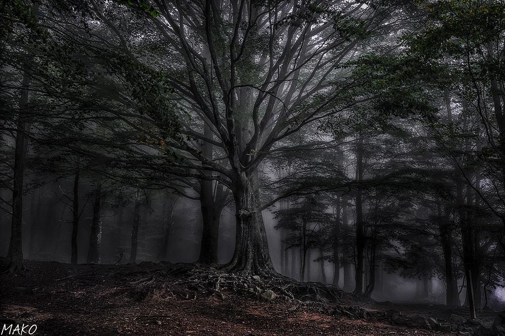Photo in Landscape #paisajes #bosque #niebla #montseny #naturaleza