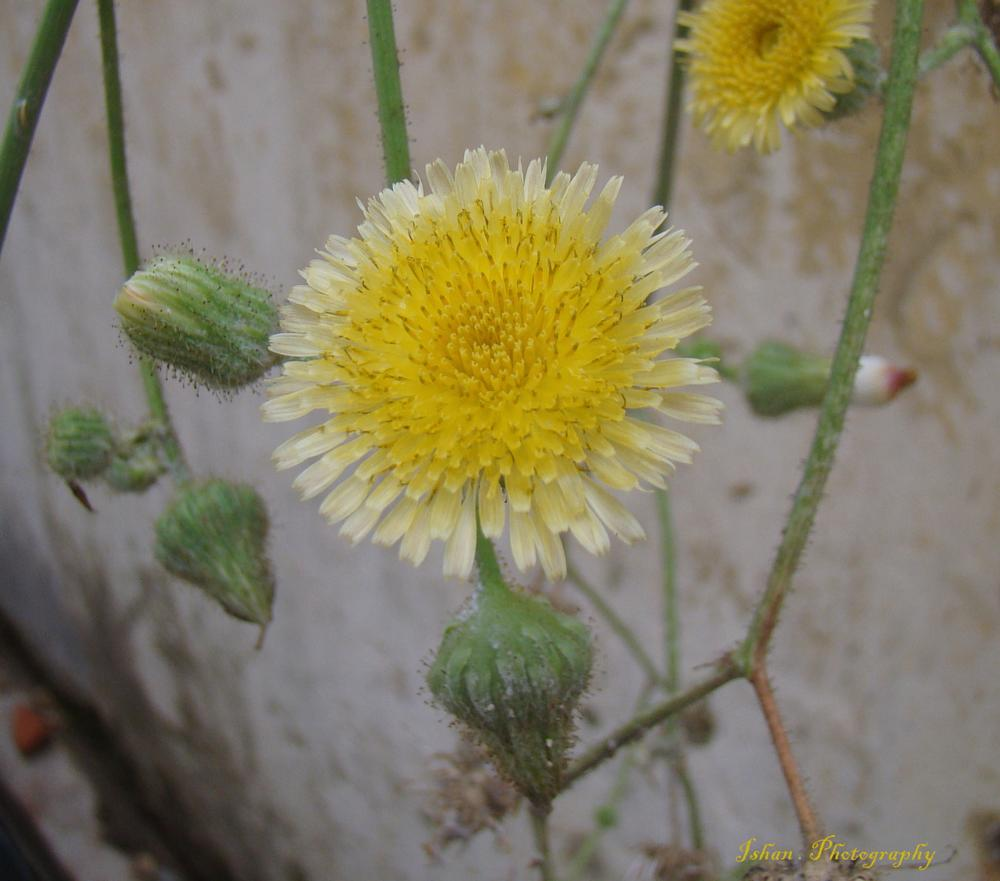 Photo in Nature #wall #yellow #flower #green #nature