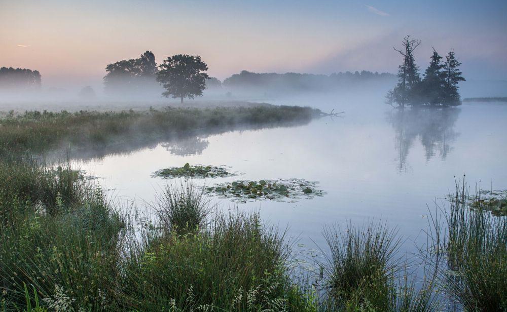 Photo in Landscape #brabant #netherlands #mood #sunrise #foggy #landscape #water #trees #100 #new year #happy new year