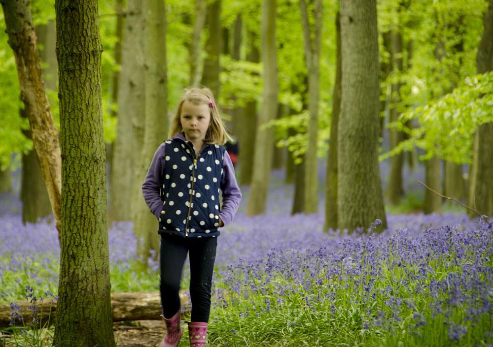 Photo in Landscape #woods #children #flowers