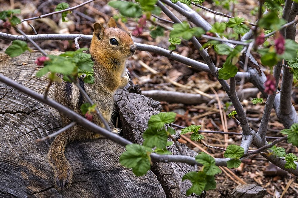 Photo in Animal #squirrel #tree stump #forest #mountains #animal