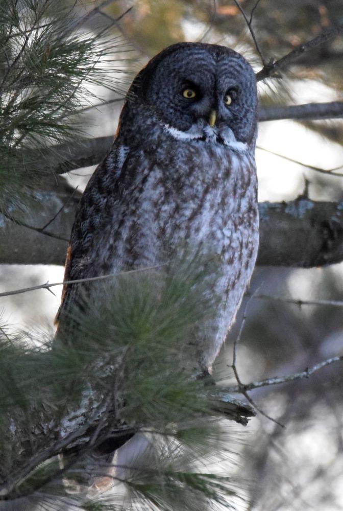 Photo in Animal #nature bird owl
