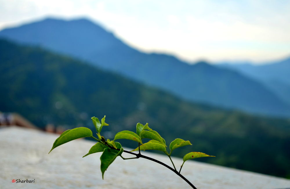 Photo in Landscape #landscape #nature #hills