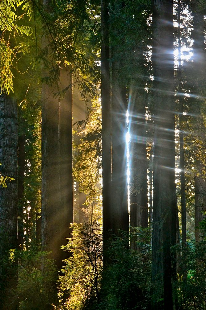 Photo in Landscape #forest #light