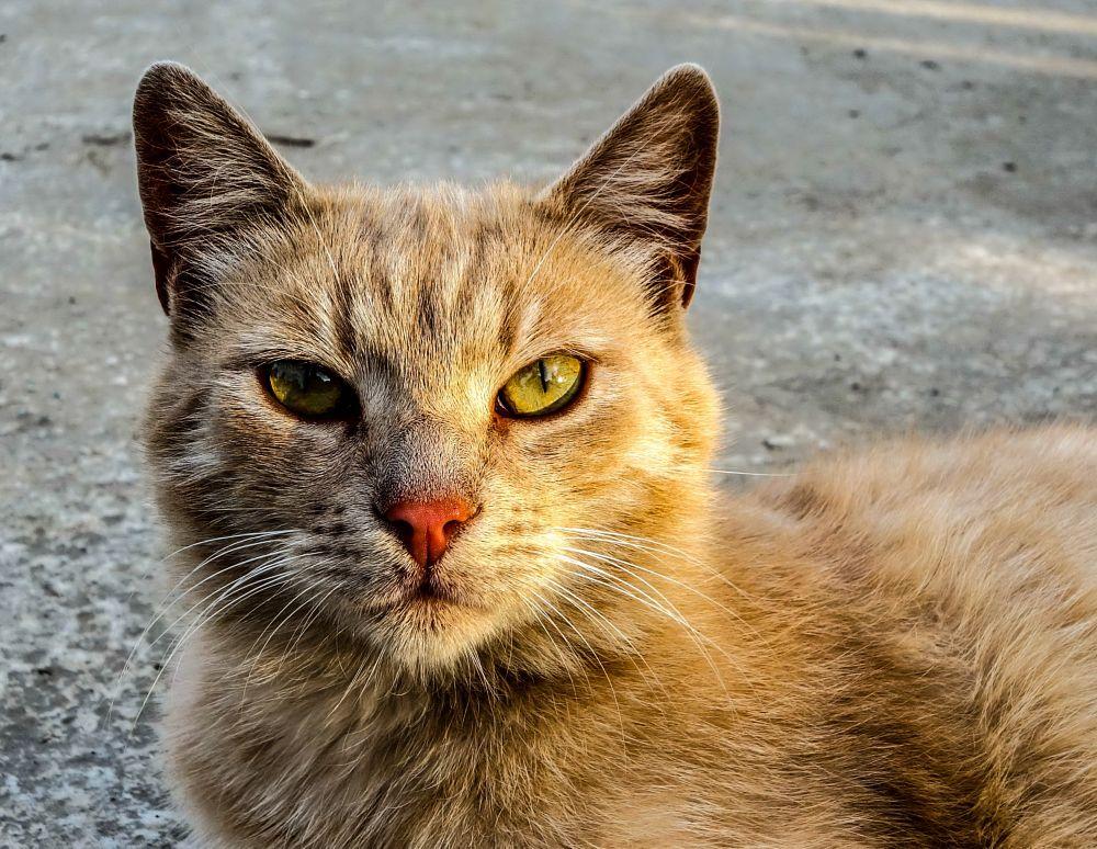 Photo in Animal #cat #yellow #breown