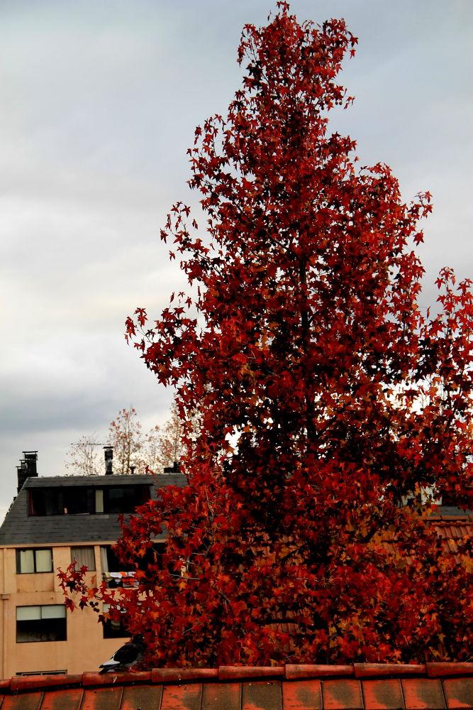 Photo in Nature #santiago #chile #autumn #nature