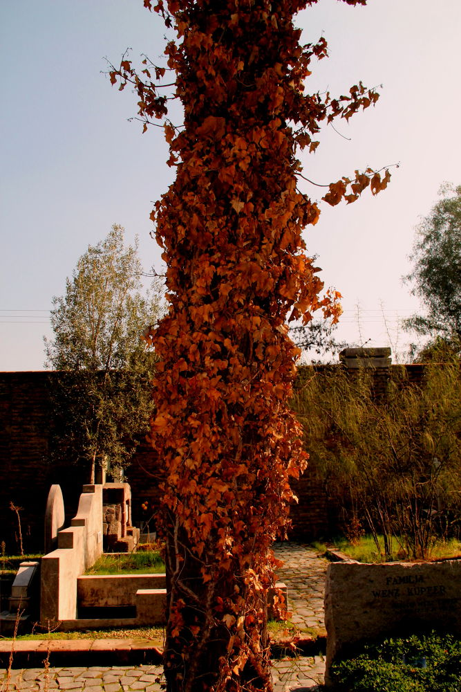 Photo in Nature #santiago #chile #nature #autumn #general cementery