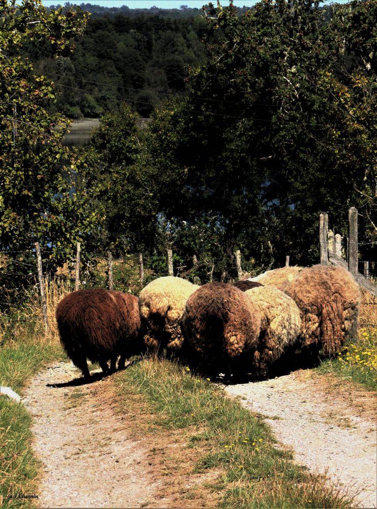 Photo in Animal #sheep #animals #rural #trees