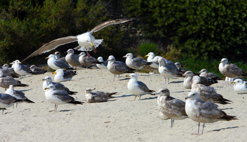 Photo in Animal #shore birds #seagulls #beach