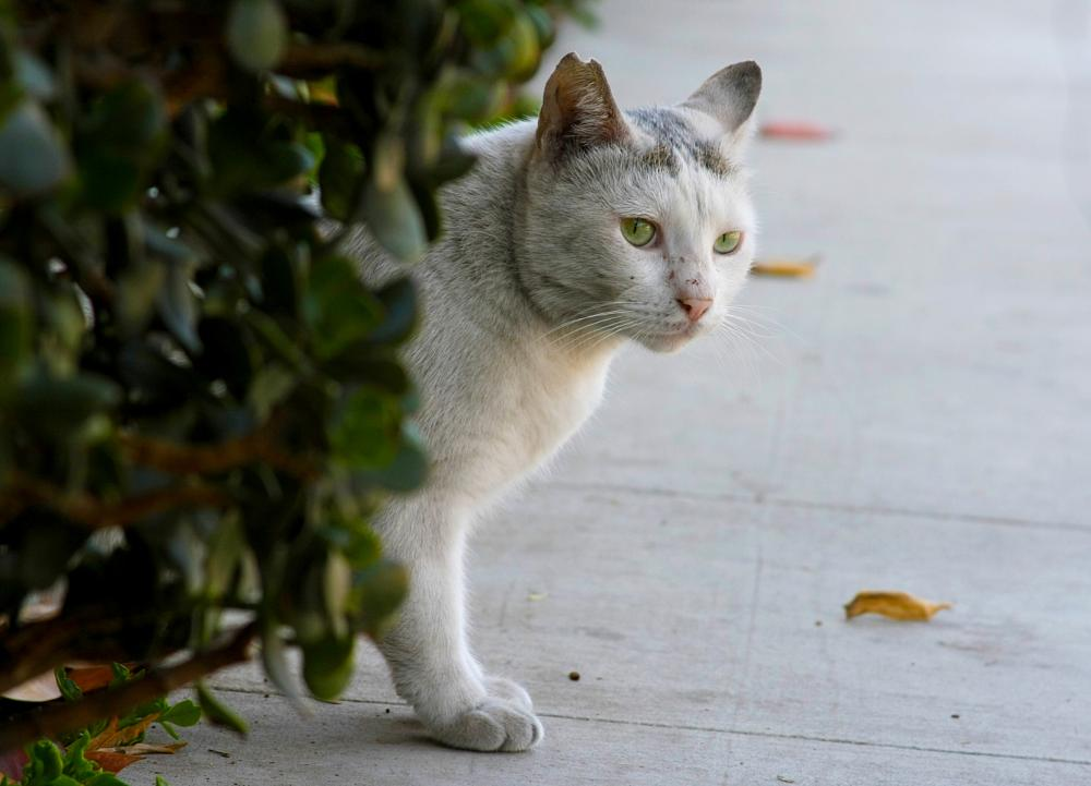 Photo in Animal #animal #cat #feral #ear tip