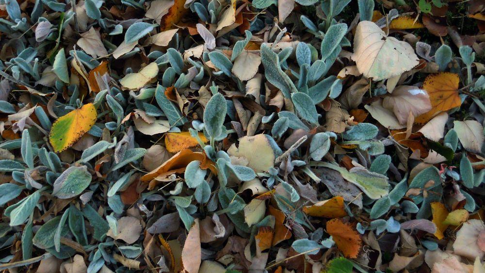 Photo in Nature #autumn #igor bartolec