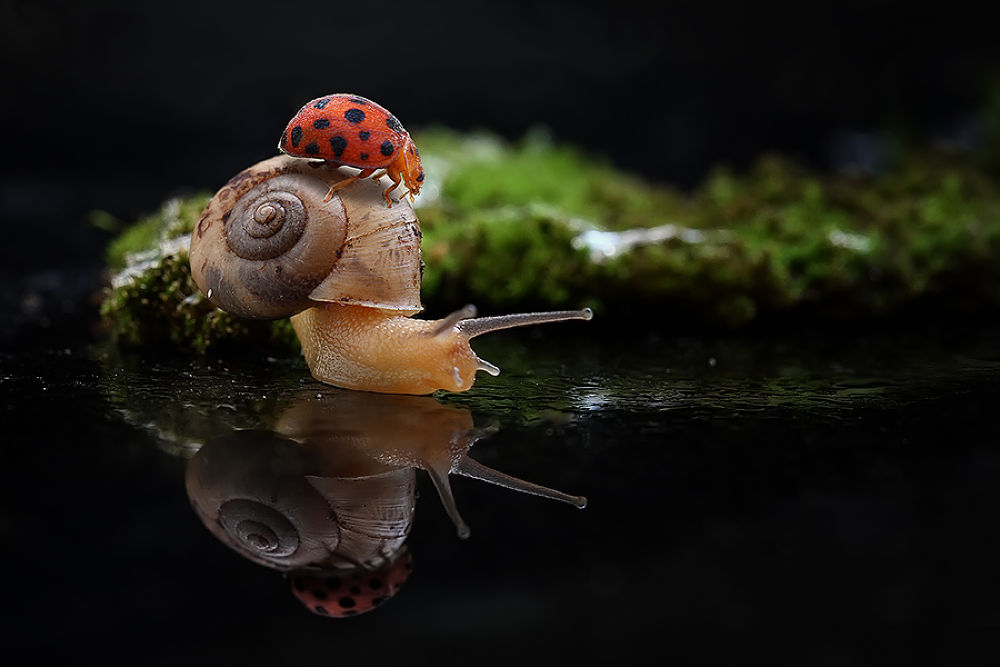 Photo in Macro #friendship #ladybug #snail #macro #conceptual macro #red #green #reflection #nature #insect