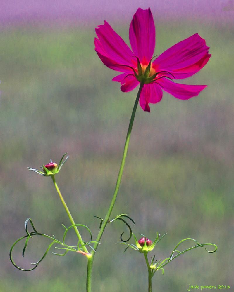 Photo in Nature #flower #pink #garden