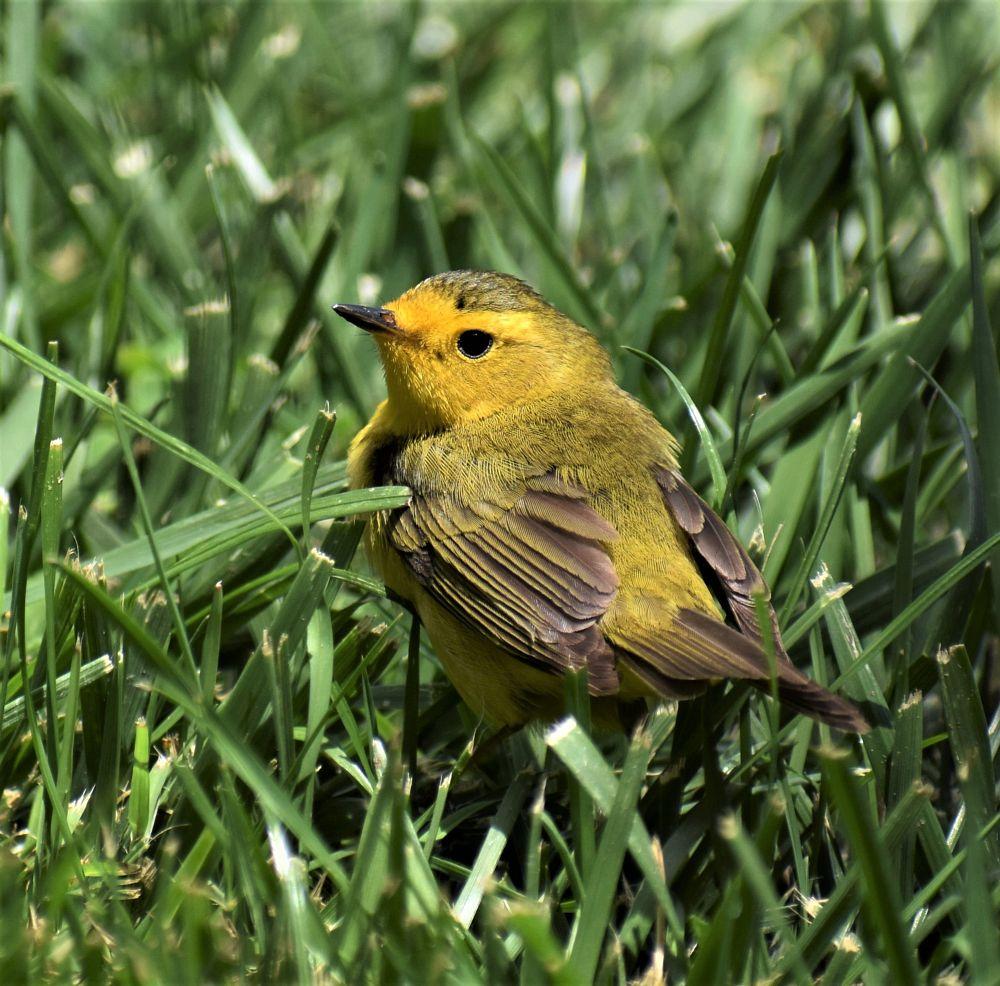 Photo in Random #birds #nature #random