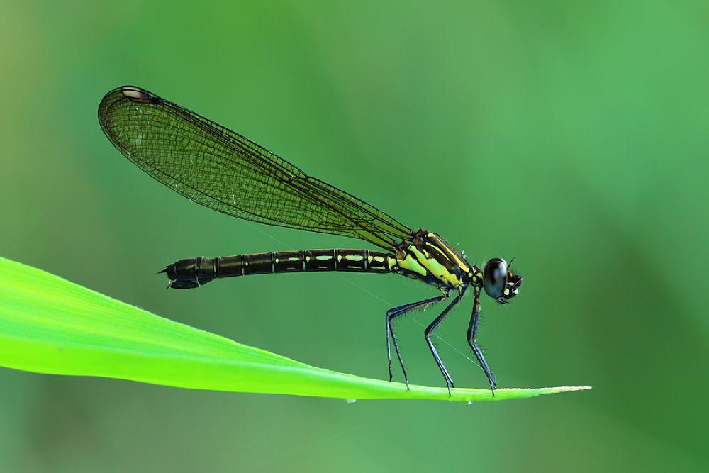Photo in Macro #macro #micro #nature #animals #indonesian