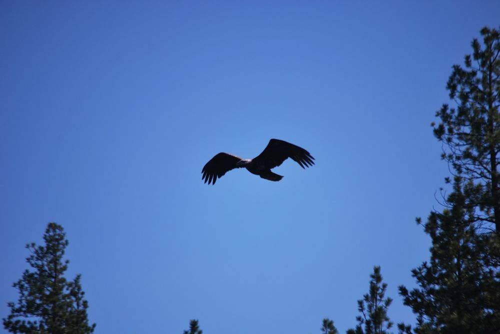 Photo in Nature #eagle beauty