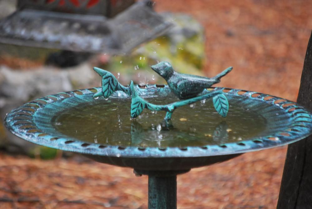 Photo in Nature #splashing rain drop