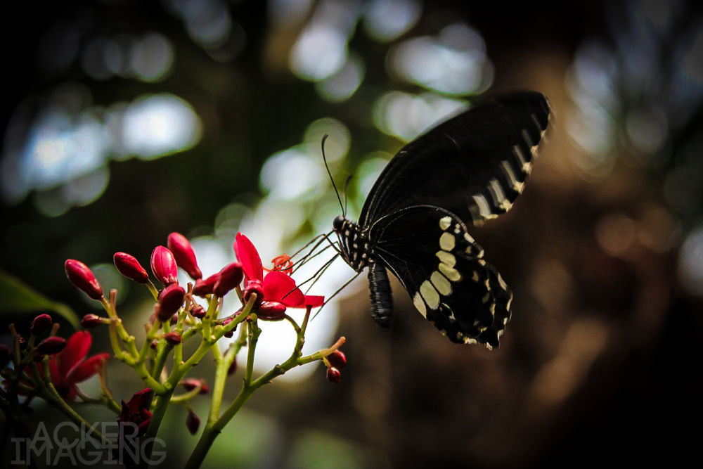 Photo in Nature #butterfly #nature #flight