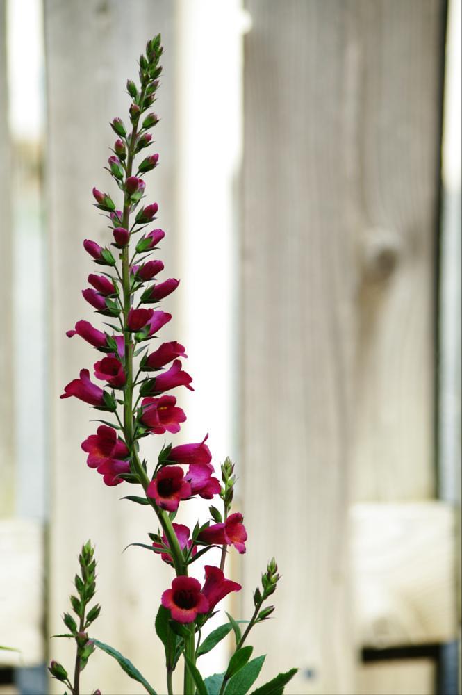 Photo in Random #flowers #bell