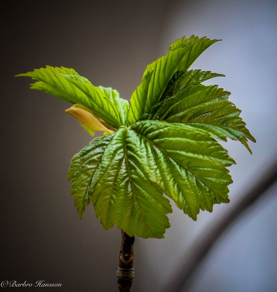 Photo in Nature #nature #leaves #close-up