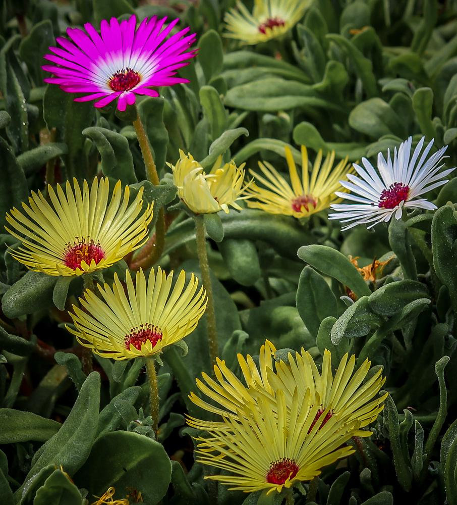 Photo in Random #nature #flowers #mixed colours