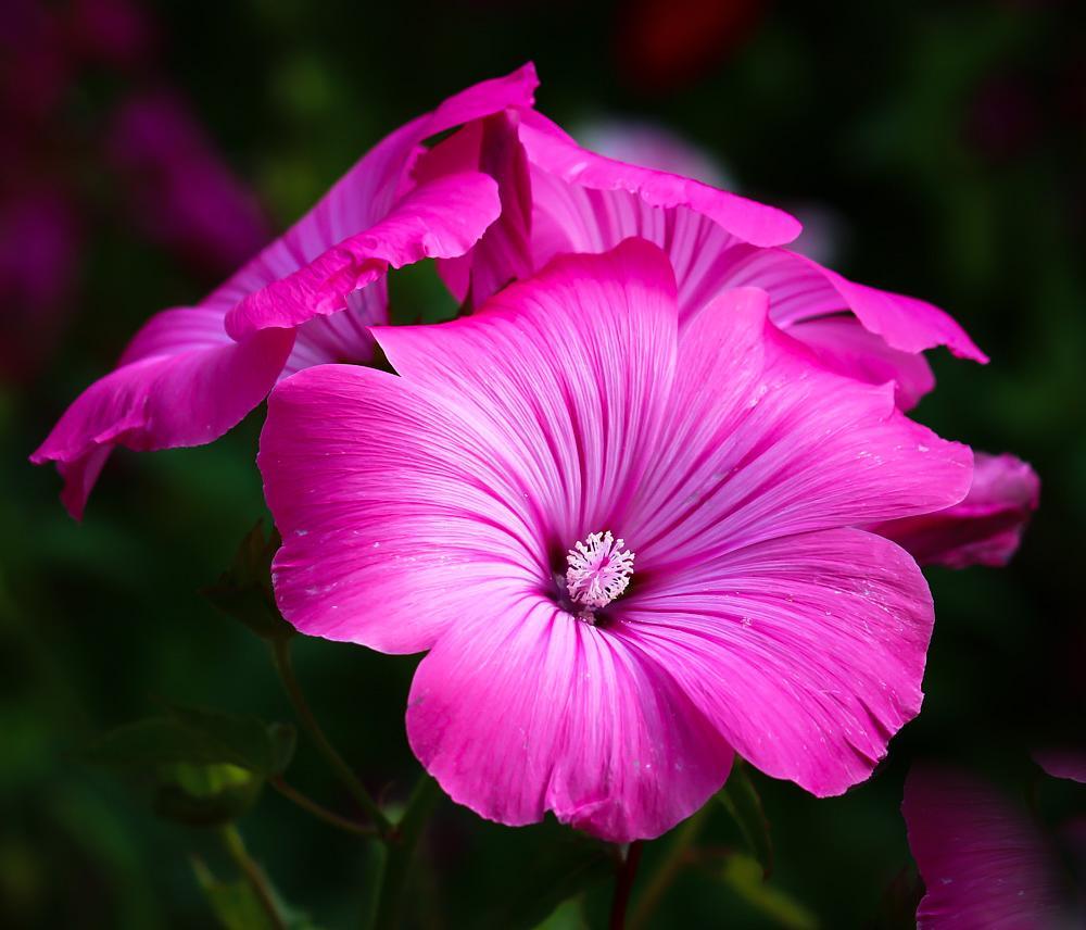 Photo in Random #nature #macro #flowers