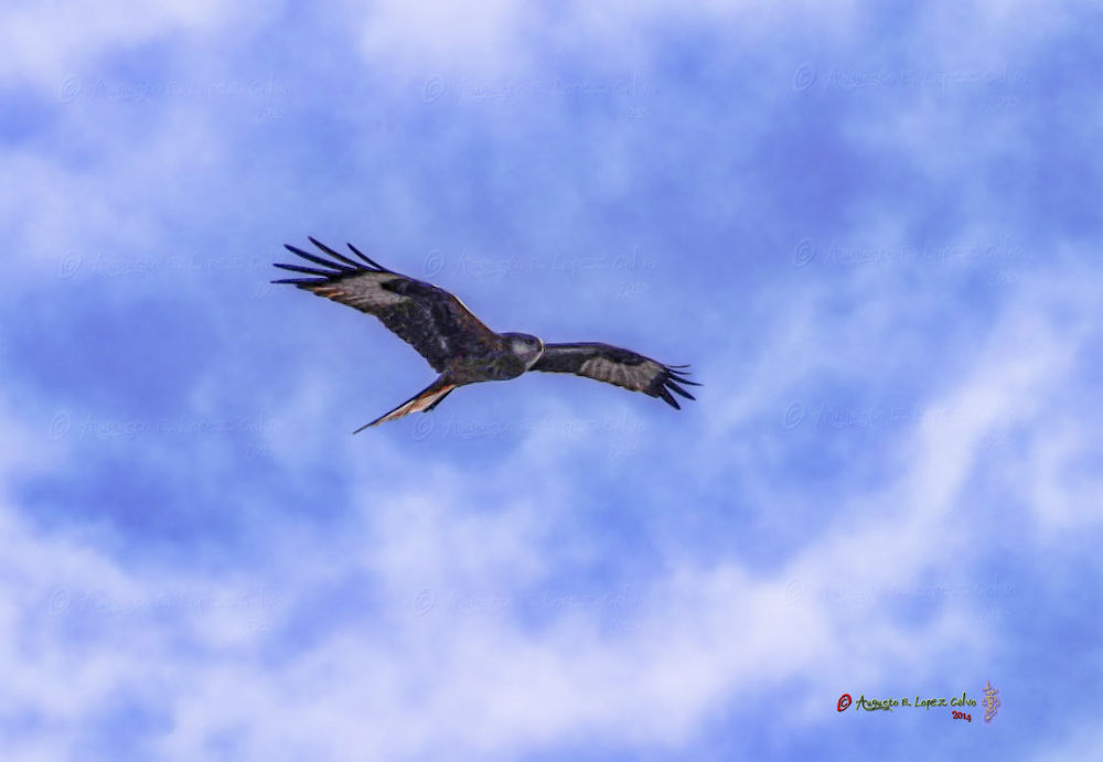 Photo in Animal #águila