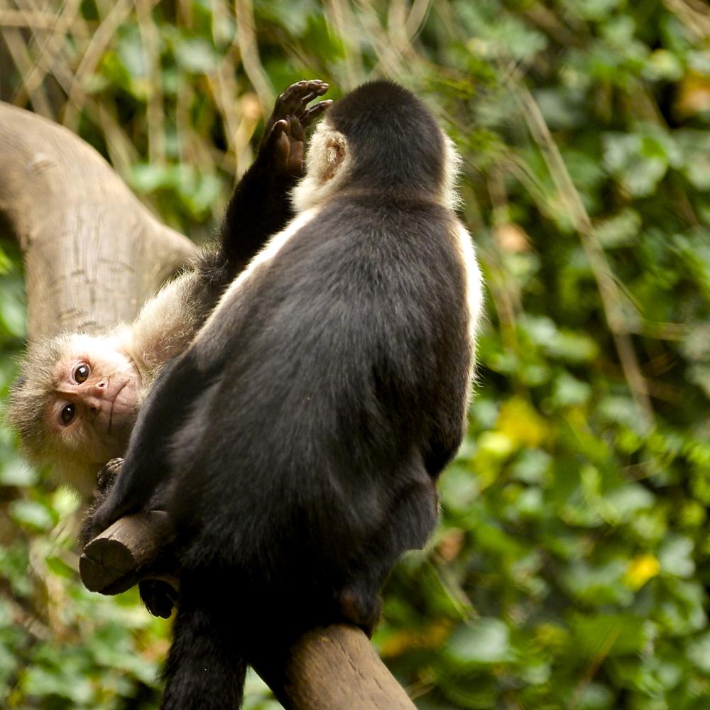 Photo in Animal #monkey #watching #zoo #animal