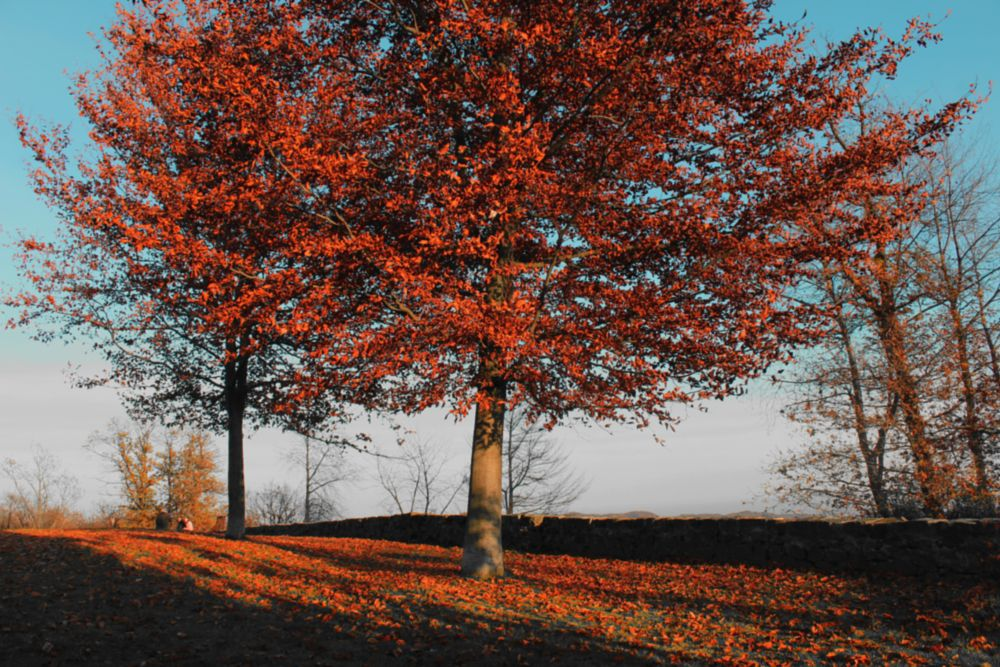 Photo in Landscape #leaves #tree #fall