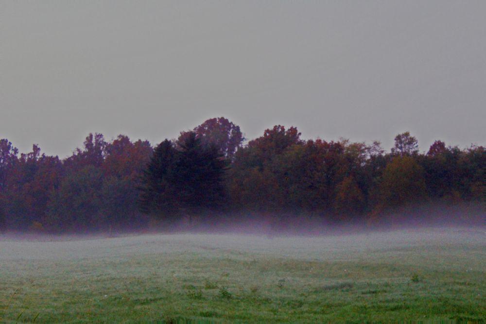 Photo in Rural #mist #field #autumn