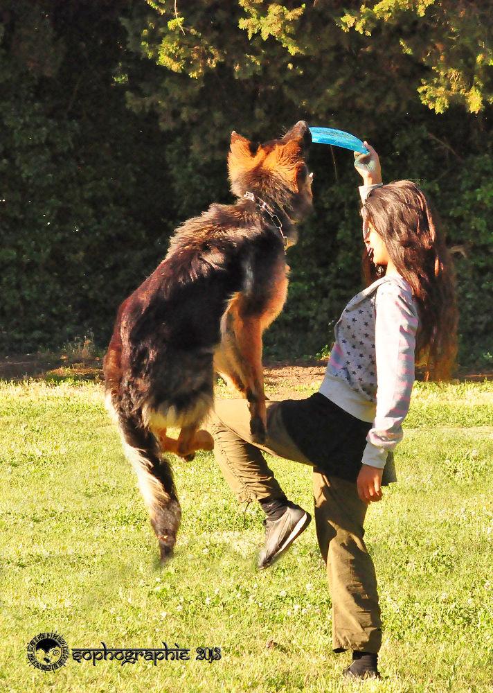 Photo in Random #sophographie/photos & citation #une excurssion freesbi-dog