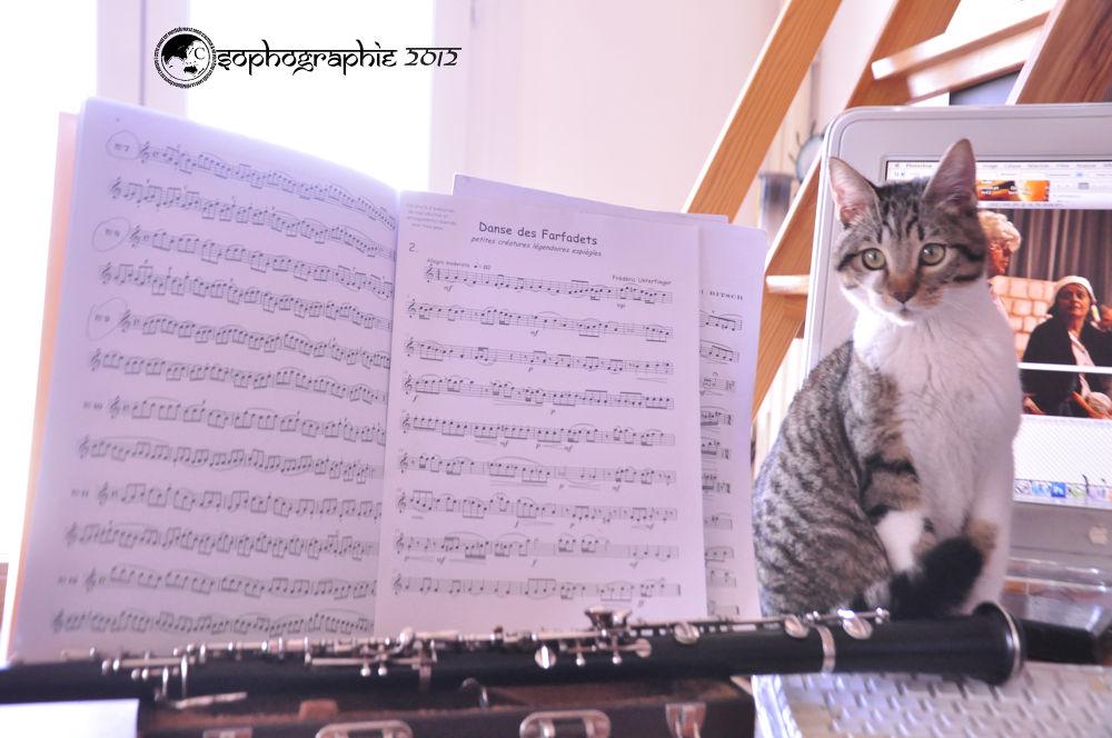 Photo in Animal #scat-csat