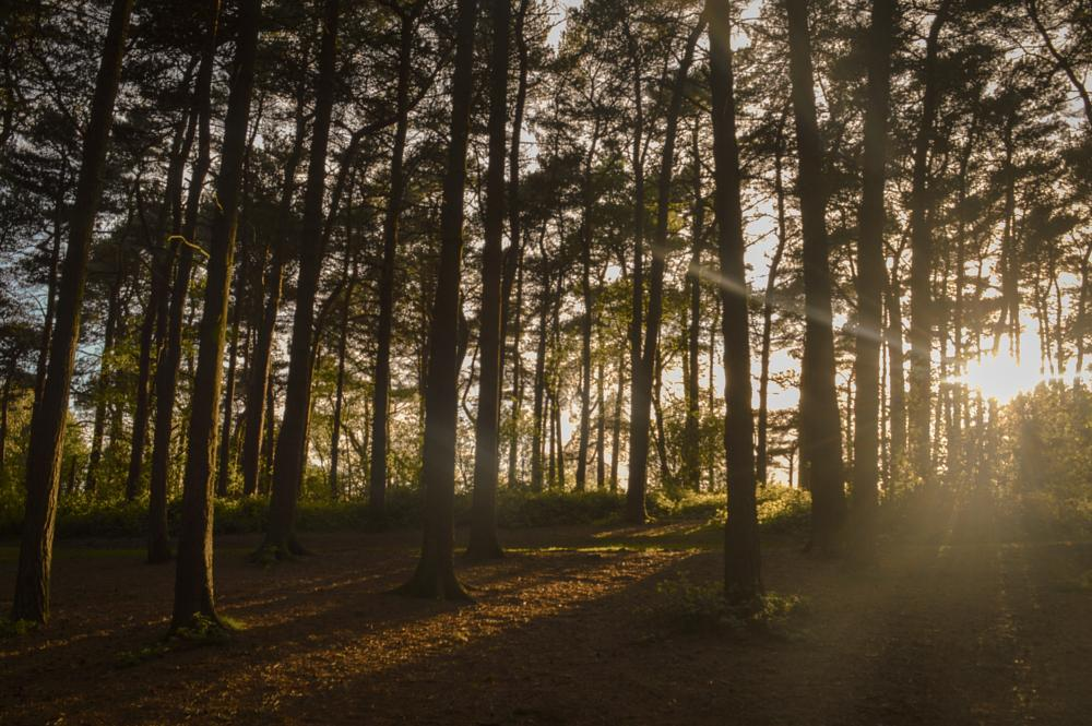 Photo in Nature #sun #woods #trees #lickey #hills #peace