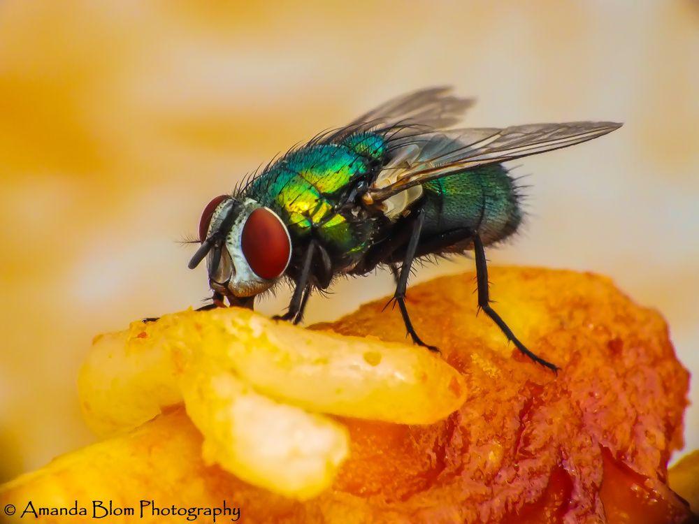 Photo in Macro #ypa2013 #macro #fly #insect #rice #chicken #eating #food #nature #animal #sharp #close-up #fujirilm #raynox