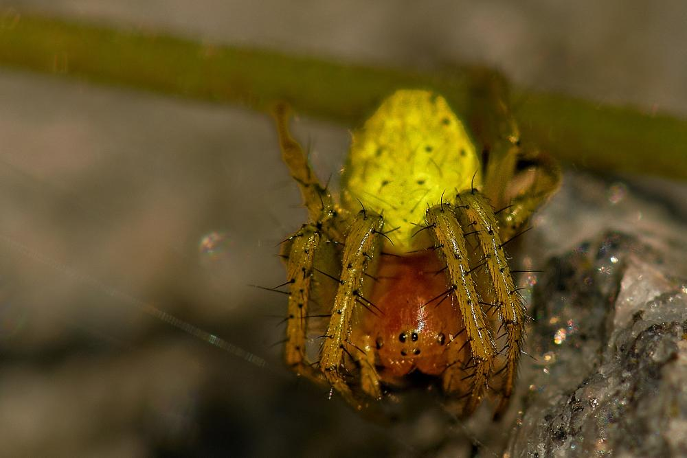 Photo in Macro #spider #green #spin