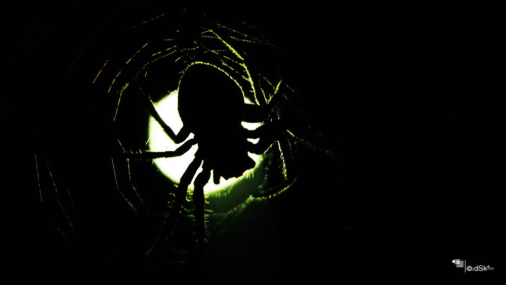 Photo in Animal #nature #animal #spider #moonlight #art #abstract