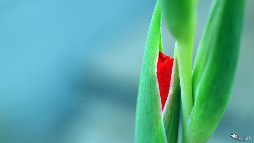 Photo in Nature #nature #art #plant #flower #travel #macro