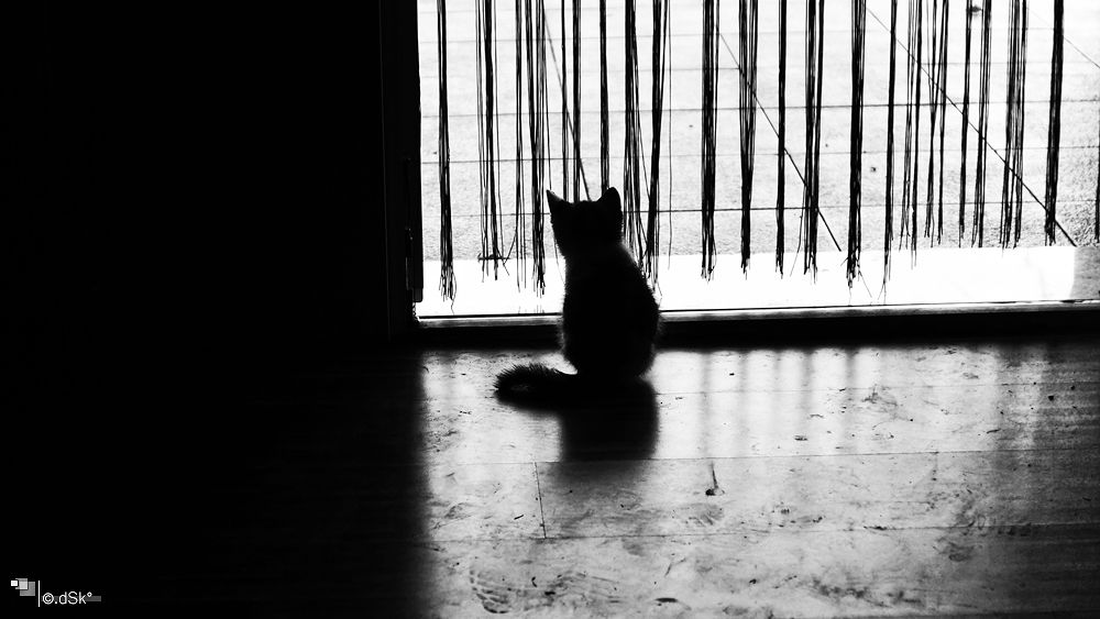 Photo in Animal #kitty #home #contemplating #summer #pet