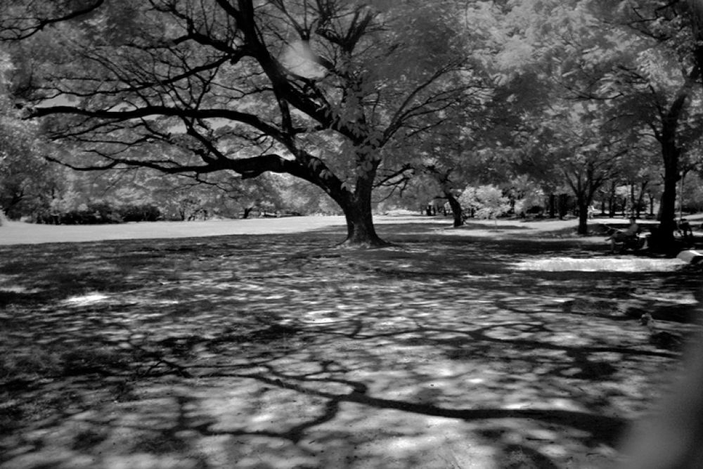 Photo in Black and White #park #nature